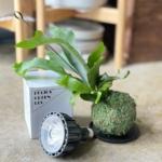 Helios Green LED HG24(ヘリオスグリーンLED)の販売開始